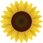 Jo Hayns sunflower